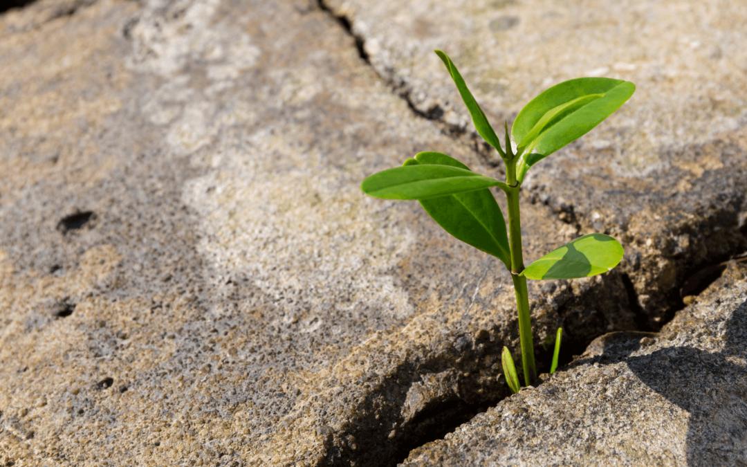 Navigating adversity